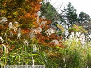 Nov20_Mt_Takao_FallColors13_MomijiDaiRC