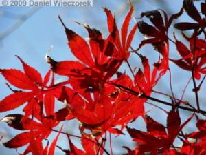 Nov20_Mt_Takao_FallColors22_MomijiDaiRC