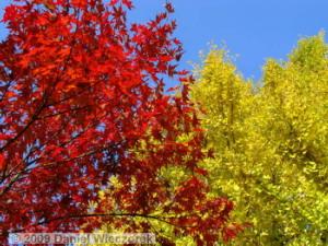 Nov29_JindaiBG_004_GateFallColorRC