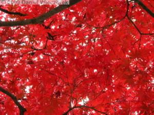 Nov29_JindaiBG_242_ShrineArea_FallColorsRC