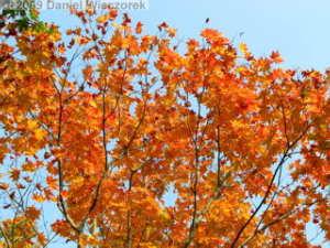 Oct31_ShowaKinenPk060_JapaneseGardenColorsRC