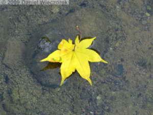 Oct31_ShowaKinenPk066_JapaneseGardenColorsRC