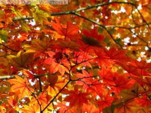 Oct31_ShowaKinenPk073_JapaneseGardenColorsRC
