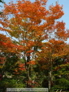 Oct31st_ShowaKinenP044_JapaneseGarden_ColorsRC