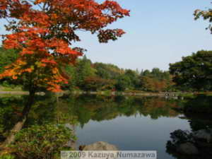 Oct31st_ShowaKinenP049_JapaneseGarden_ColorsRC