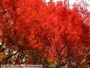 Nov13_034_Okutama_OldRoad_FallColorsRC
