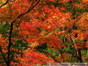 Nov13_081_Okutama_OldRoad_FallColorsRC
