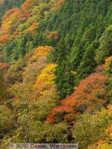 Nov13_091_Okutama_OldRoad_FallColorsRC