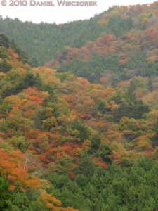 Nov13_097_Okutama_OldRoad_FallColorsRC