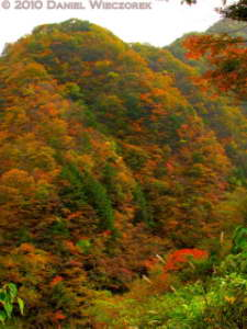 Nov13_150_151_152_TMTC_Okutama_OldRoad_FallColorsRC