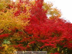 Nov13_264_Mitake_TamaRiverNearGinkgoRC
