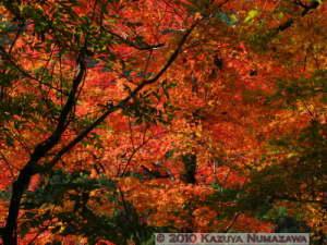 Nov13th_Okutama049RC