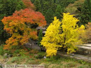Nov14_004_Mitake_TamaRiverGinkgoRC
