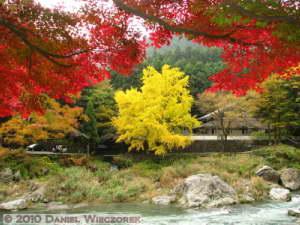 Nov14_015_Mitake_TamaRiverGinkgoRC