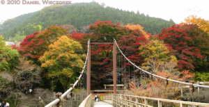 Nov14_057_058__Stitch_Mitake_TamaRiverNearGinkgoRC