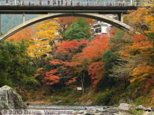 Nov14_076_Mitake_TamaRiverNearGinkgoRC