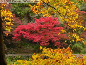 Nov14_079_Mitake_TamaRiverNearGinkgoRC