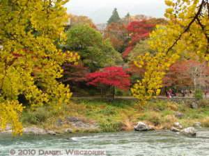 Nov14_086_Mitake_TamaRiverGinkgoRC