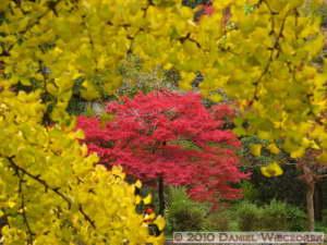 Nov14_092_Mitake_TamaRiverGinkgoRC