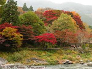 Nov14_100_Mitake_TamaRiverNearGinkgoRC