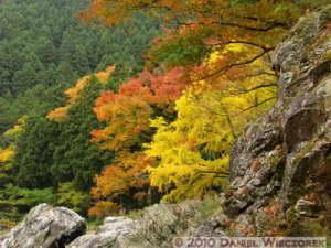 Nov14_112_Mitake_TamaRiverGinkgoRC