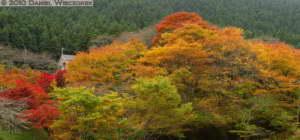 Nov14_144_145_Stitch_Mitake_TamaRiverFallColorsRC