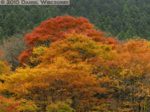 Nov14_149_Mitake_TamaRiverFallColorsRC