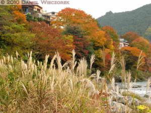 Nov14_160_Mitake_TamaRiverFallColorsRC