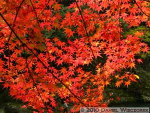 Nov14_178_Mitake_TamaRiverFallColorsRC