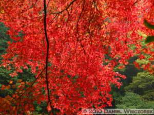 Nov14_206_Mitake_TamaRiverFallColorsRC