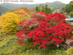 Nov14_222_Mitake_TamaRiverFallColorsRC