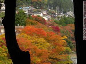 Nov14_231_Sawai_TamaRiverFallColorsRC