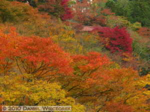 Nov14_232_Sawai_TamaRiverFallColorsRC