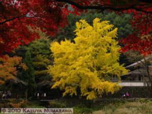 Nov14th_Mitake018RC