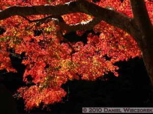 Nov19_020_TakaoSanBase_FallColorsRC