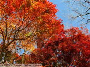 Nov19_050_TakaoSan_MomijiDai_FallColorsRC