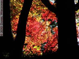 Nov19_111_TakaoSan_MomijiDai_FallColorsRC