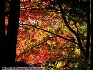 Nov19_115_TakaoSan_MomijiDai_FallColorsRC