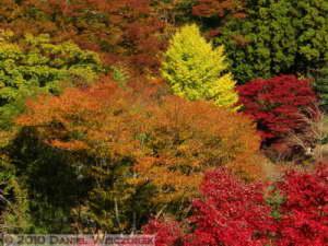 Nov20_025_MusashiItsukaichi_FallColorsRC