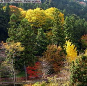 Nov20_038_039_Ex_Stitch_MusashiItsukaichi_FallColorsRC