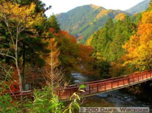 Nov20_041_042_043_TMTC_MusashiItsukaichi_FallColorsRC