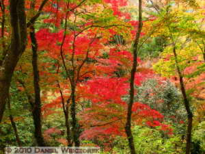 Nov20_079_MusashiItsukaichi_FallColorsRC