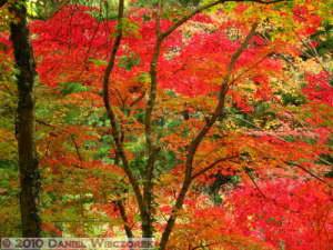 Nov20_082_MusashiItsukaichi_FallColorsRC