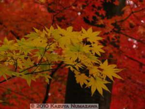 Nov20th_MusashiItsukaichi033RC