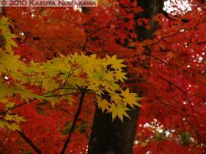 Nov20th_MusashiItsukaichi035RC