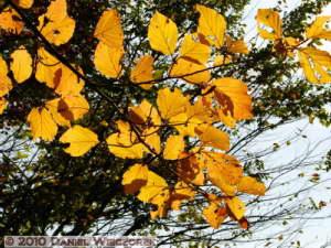 Nov21_27_NogawaPark_FallColorsRC