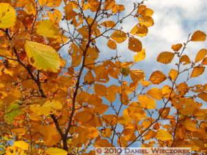 Nov21_31_NogawaPark_FallColorsRC