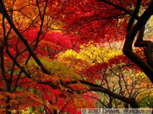 Nov26_035_JindaiBG_FallColorsRC