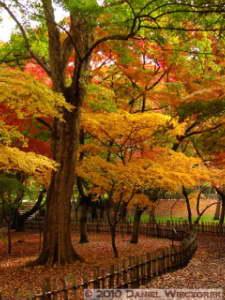 Nov26_041_JindaiBG_FallColorsRC