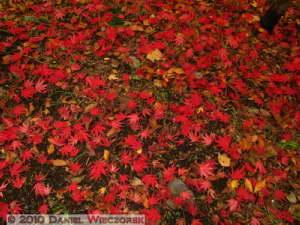 Nov26_045_JindaiBG_FallColorsRC
